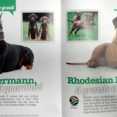 """Articolo su """"Vita da Cani"""""""